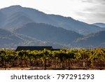 Rogue Valley, Oregon vineyard