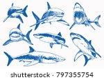 graphical set of blue sharks ... | Shutterstock .eps vector #797355754