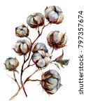 watercolor cotton plant...   Shutterstock . vector #797357674