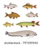 freshwater fish   set of... | Shutterstock .eps vector #797359543