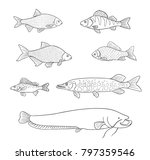 different freshwater fish in... | Shutterstock .eps vector #797359546