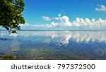 mangrove plant hangs over... | Shutterstock . vector #797372500