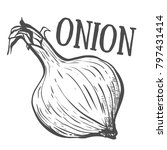 hand drawn sketch onion. eco... | Shutterstock .eps vector #797431414