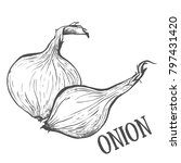 hand drawn sketch onion. eco...   Shutterstock .eps vector #797431420