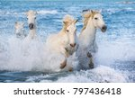 white camargue horses galloping ... | Shutterstock . vector #797436418
