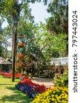 landscape of mae fah luang... | Shutterstock . vector #797443024