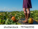 heirloom pumpkin and woman with ... | Shutterstock . vector #797463550