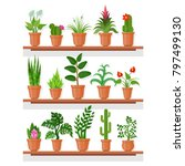 indoor plants on shelf. indoor...   Shutterstock .eps vector #797499130
