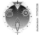 origin of life  shell ... | Shutterstock .eps vector #797505238