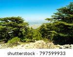 cedars of lebanon  cedrus...   Shutterstock . vector #797599933
