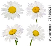 chamomile flower isolated with... | Shutterstock . vector #797600284