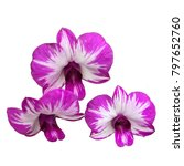 purple and white orchid... | Shutterstock . vector #797652760