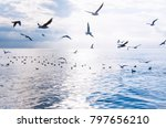sea. flying seagulls over the...   Shutterstock . vector #797656210