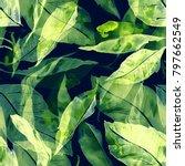 leaves of mandarin tree repeat... | Shutterstock . vector #797662549