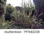 Small photo of Decorative grass calamus in Lloret de Mar, Costa Brava, Catalonia, Spain