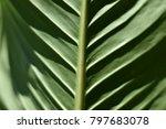 tropical dark green leaf   Shutterstock . vector #797683078