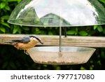 nuthatch bird  sitta europaea ... | Shutterstock . vector #797717080