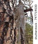 Small photo of Animal scull of a tree