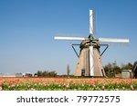 Dutch Windmill In A Tulipfield...