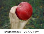 Small photo of year, natural product, ecologically clean, yawl, red apple in hand, beautiful fruit, farming
