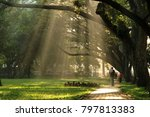 morning at cubbon park ... | Shutterstock . vector #797813383