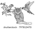 coloring page for print   owl... | Shutterstock .eps vector #797813470