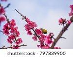 chestnut flanked white eye ... | Shutterstock . vector #797839900