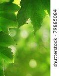 Beautiful Vine Creeper Leaves...