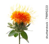 safflower isolated | Shutterstock . vector #79890223