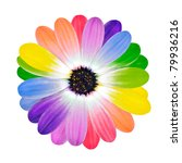 Rainbow Flower    Multi Colore...