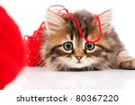 Stock photo cute little siberian kitten with red clew isolated on white background 80367220
