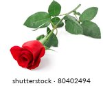 Branch Of Red Rose Isolated On...