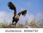 American Bald Eagle Takes...