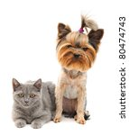 Cat And Dog Isolated On White...