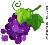 illustration of isolated grapes ... | Shutterstock .eps vector #80796805