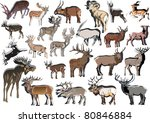 illustration with deer... | Shutterstock .eps vector #80846884