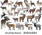 illustration with deer...   Shutterstock .eps vector #80846884