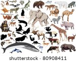 set of wild mammals isolated on ... | Shutterstock .eps vector #80908411