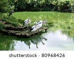 self isolate | Shutterstock . vector #80968426