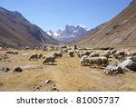 flock of sheep in broad valley  ... | Shutterstock . vector #81005737