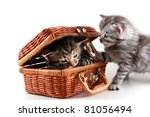 Kittens plays in basket - isolated on white background - stock photo
