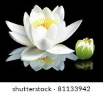 White Water Lily Flower And Bu...