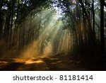 the colors of indian winter | Shutterstock . vector #81181414