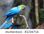 parrot action | Shutterstock . vector #81236716