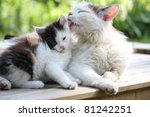 Stock photo cute kitten and his mother 81242251