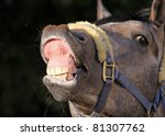 Funny smiling horse portrait - stock photo