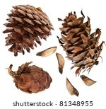 Cones Collection Set  Isolated...