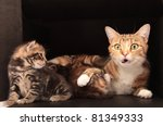 Stock photo mother cat looking surprised 81349333