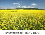 A Field With Flowering Yellow...