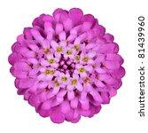 Beautiful Pink Iberis Flower - Thymus Serpyll Isolated on White Background - stock photo